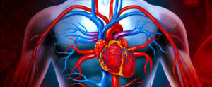 Sakarya Eğitim ve Araştırma Hastanesi Kalp ve Damar Cerrahisi Bölümü Doktor Kadrosu