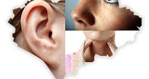 Kulak Burun Boğaz